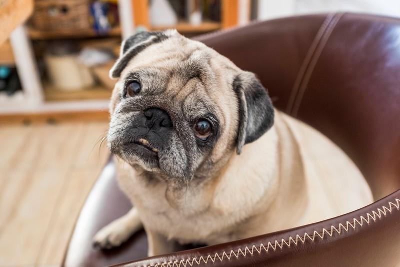 Der perfekte Name für Hunden mit einem starken Willen: Willa.