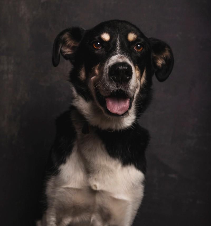 Faya ist ein toller englisch-australischer Name für einen Hund.