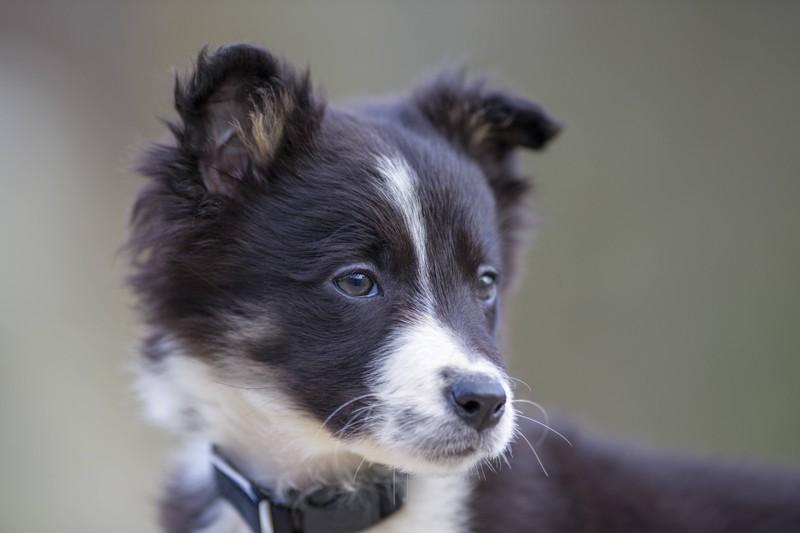 Für echte Prinzen unter den Hunden: Der Name Oskar.