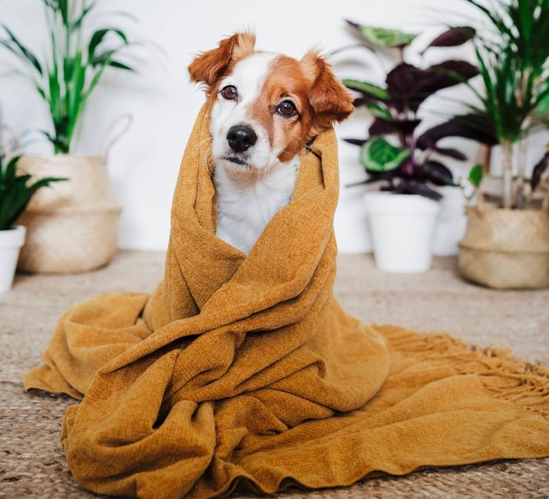 Für kleine, freundliche Hunde eignet sich der Name Bilbo.