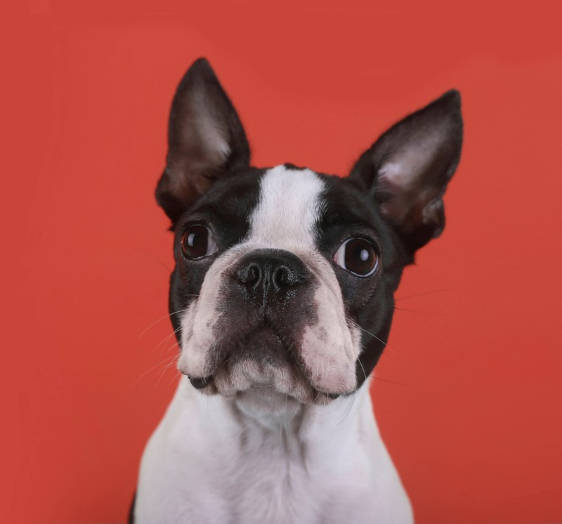 Lieb und teuer: Milo ist der perfekte Hundename.