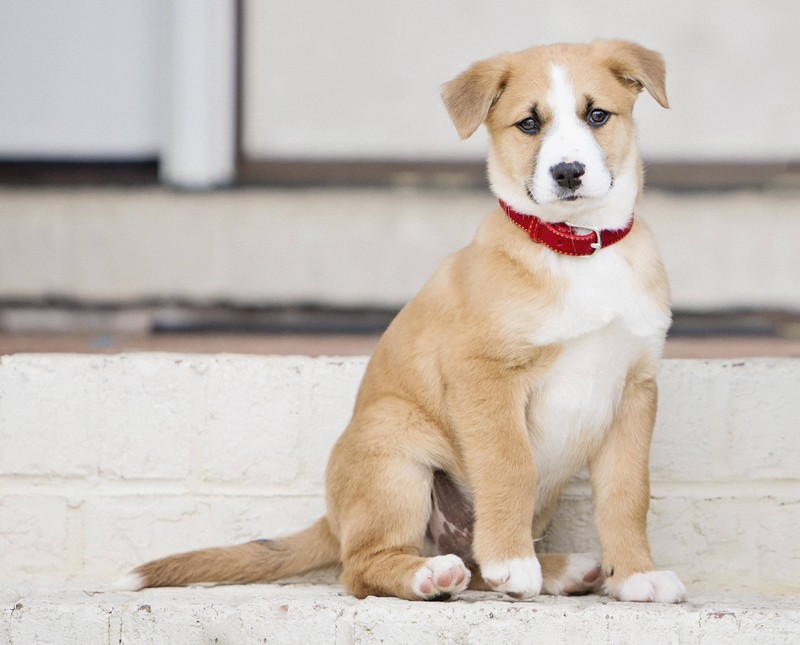 Welche Hundenamen klingen am schönsten?