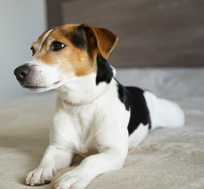 Zora ist ein wirklich toller Name für einen Hund!