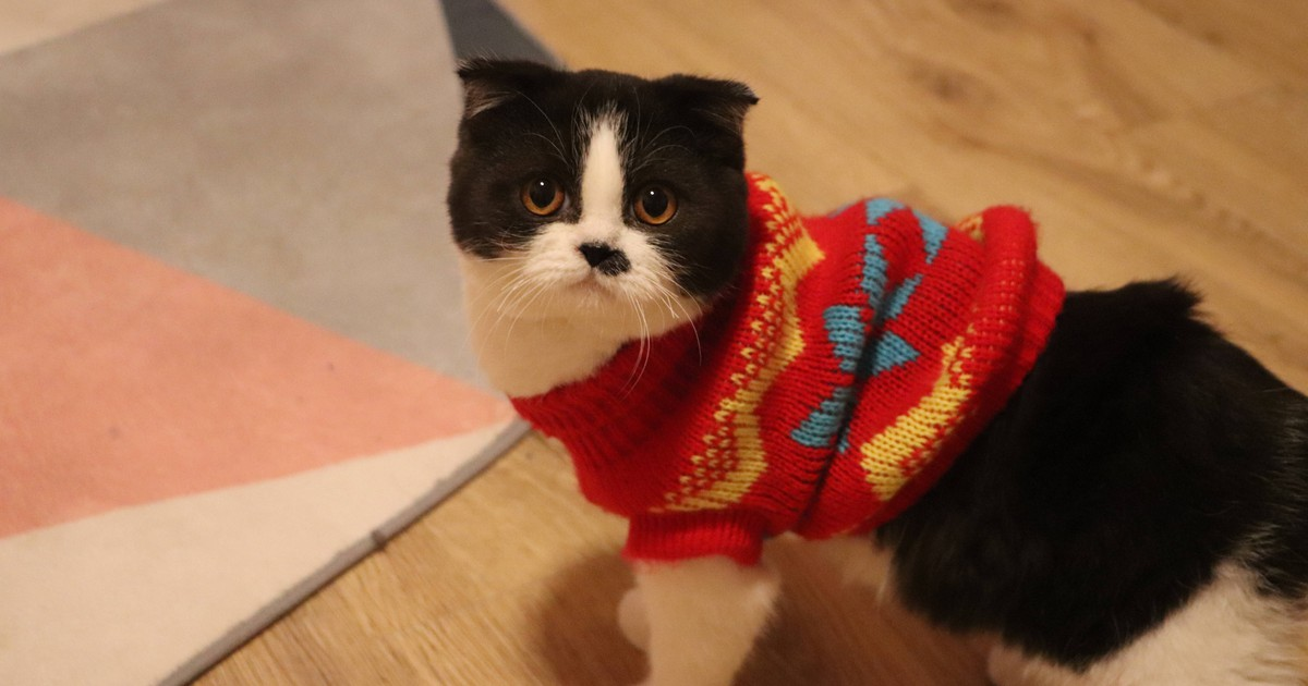 Katzen verstehen: 14 Dinge, die jeder Katzenhalter wissen sollte