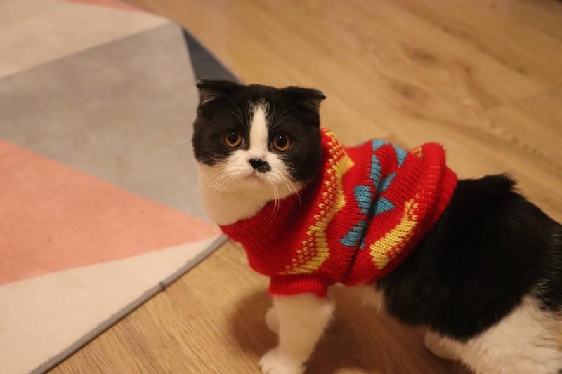 Katzen haben ihre ganz eigene Körpersprache, die Menschen lernen müssen.
