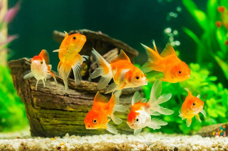 Viele fische über 50 datierung
