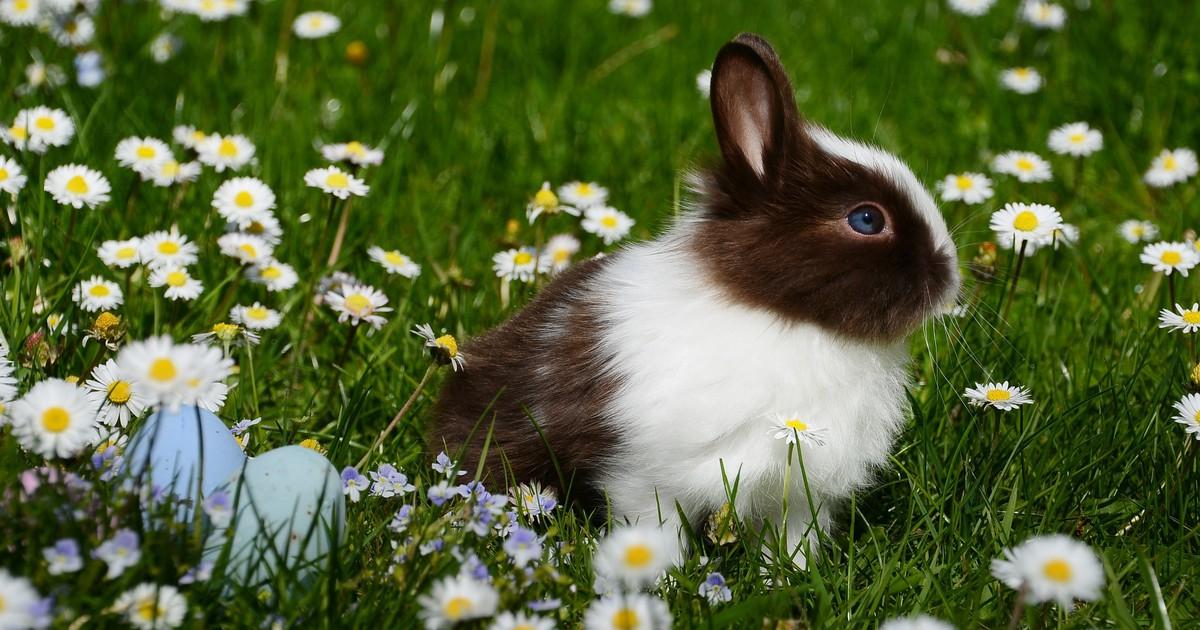 10 Fakten über Kaninchen, die du bestimmt noch nicht wusstest