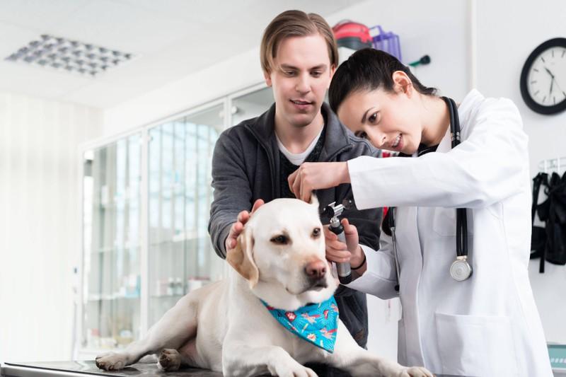 Ein Welpe beim Tierarzt