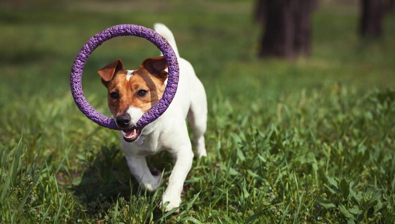 Junger Hund, der spielt