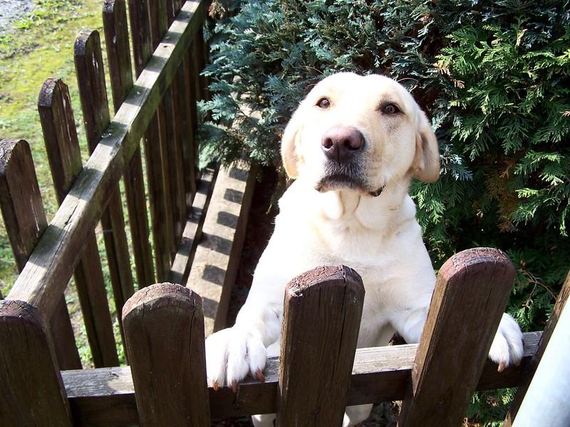 Dein Hund liebt dich, wenn er sich freut, dass du nach Hause kommst.