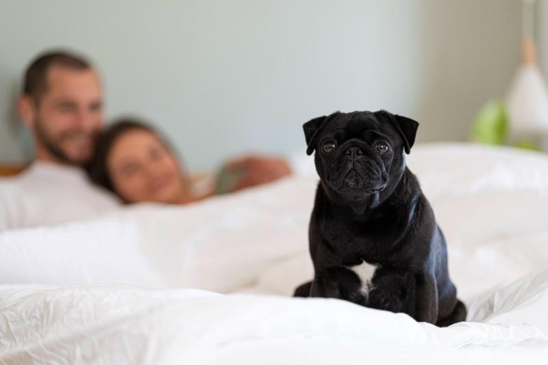 Dein Hund zeigt dir seine Liebe, wenn er nachts in deiner Nähe sein möchte.