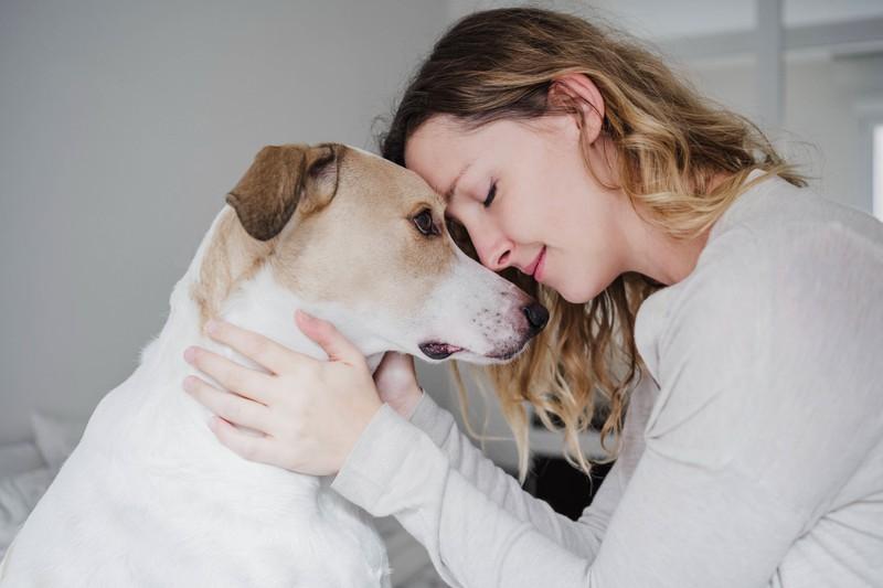 Schauen Hunde einem in die Augen, ist das ein Anzeichen für ihre Zuneigung.