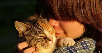 5 Anzeichen, an denen du erkennst, dass deine Katze dich liebt