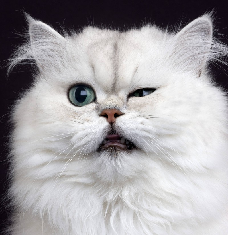 Das Zwinkern deiner Katze ist ein Anzeichen für ihre tiefe Zuneigung.