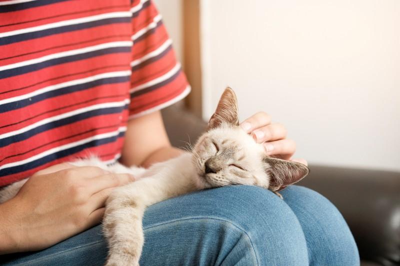 Eine Katze schläft nur in deiner Nähe, wenn sie sich sicher und wohl fühlt.