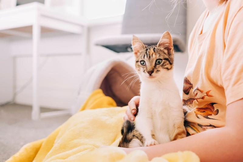 Hast du den Milchtritt bei deiner Katze schon beobachten können?