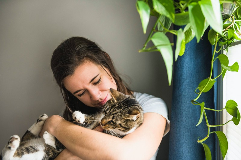 Reibt deine Katze ihren Kopf an dir, so will sie dir ihre Liebe zeigen.
