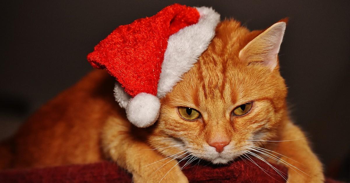 Gift Guide: Was schenkst du deiner Katze zu Weihnachten?