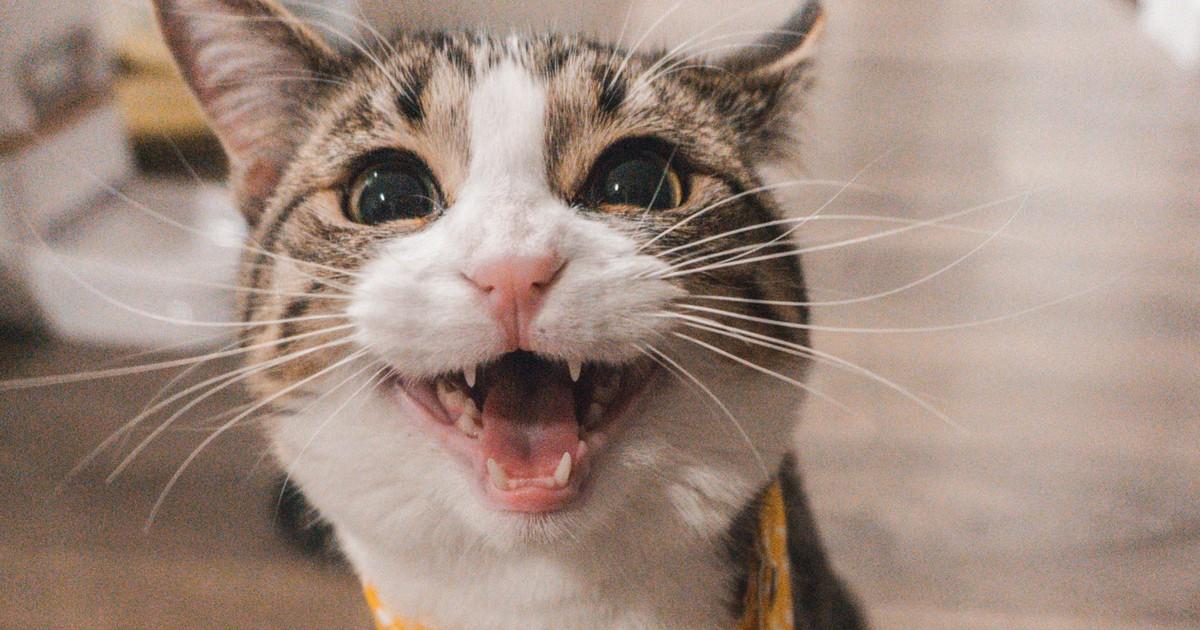 10 Dinge, die du wissen solltest, bevor du eine Katze adoptierst