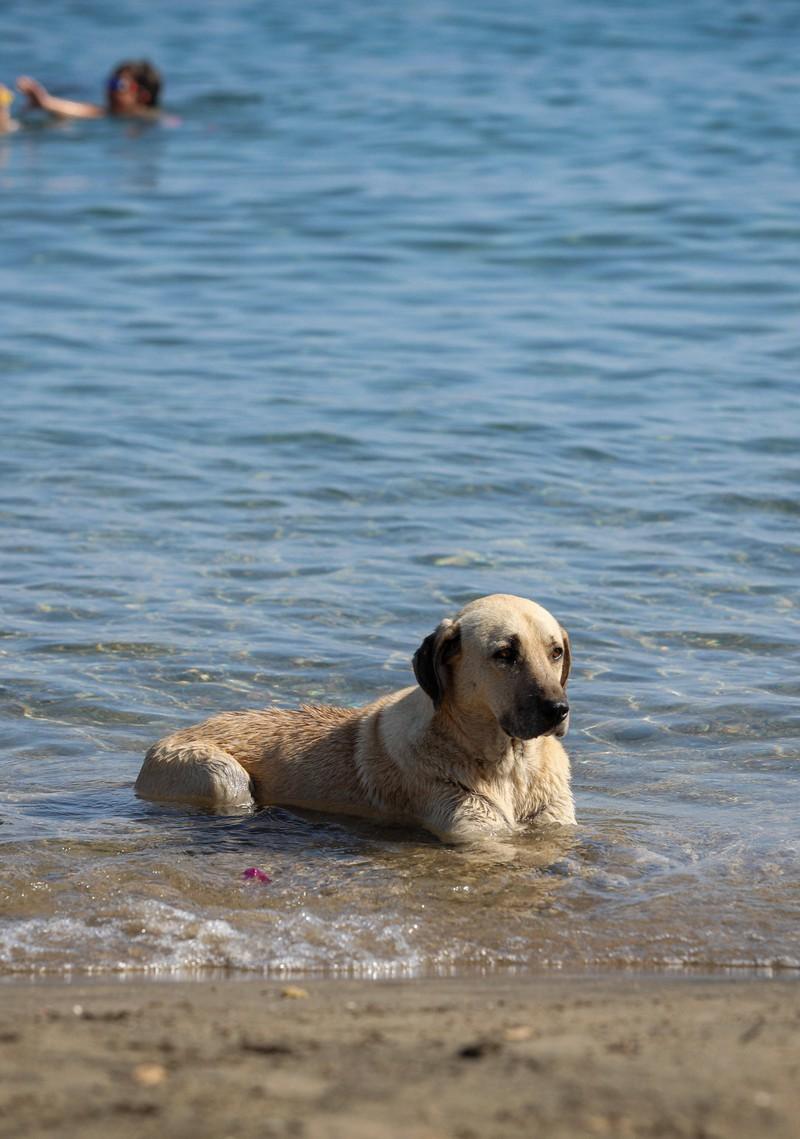 Ein Hund, der im Meer badet.