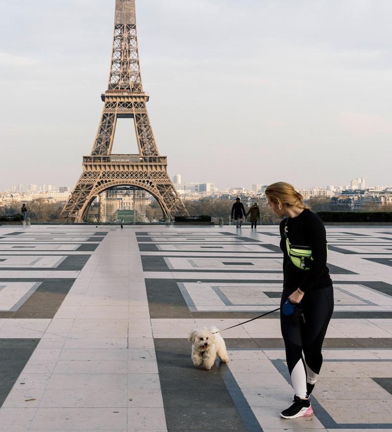 Ein Urlaub in Frankreich lohnt sich mit Hund.