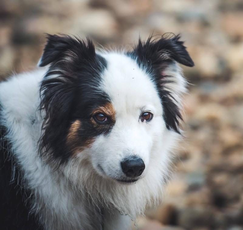 Großbritannien bietet viele Spaziergänge für Hunde.