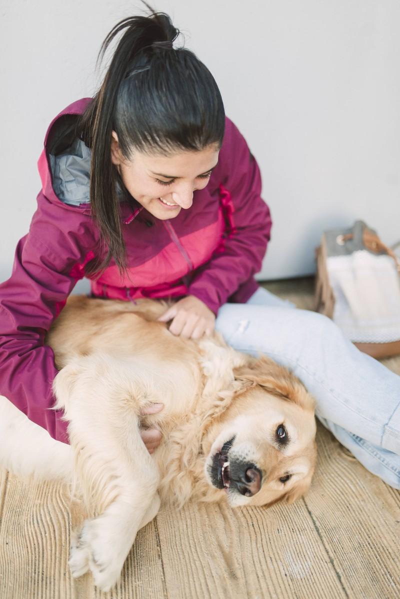 Vor dem Urlaub sollte man seinen Hund gut vorbereiten.