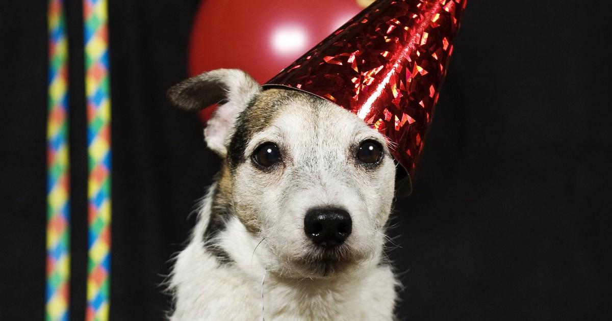Ruhiger Jahreswechsel für deinen Hund: 9 Tipps, wie der Hund es übersteht