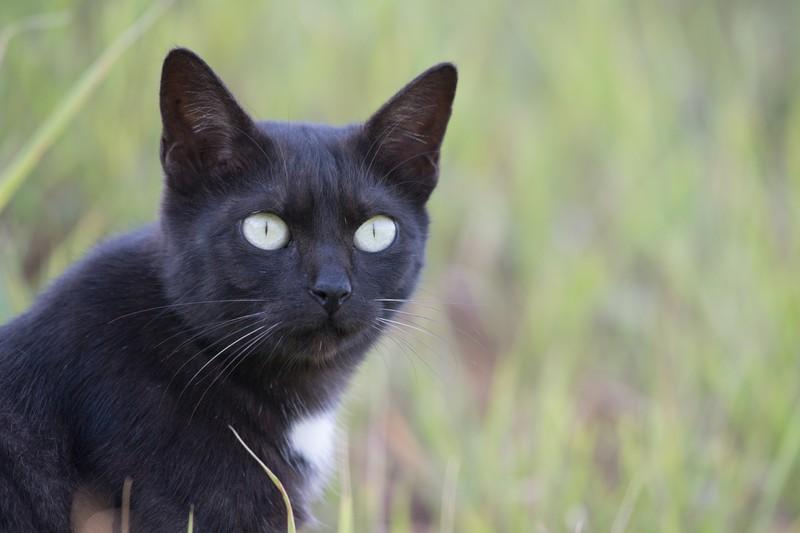 Katze draußen