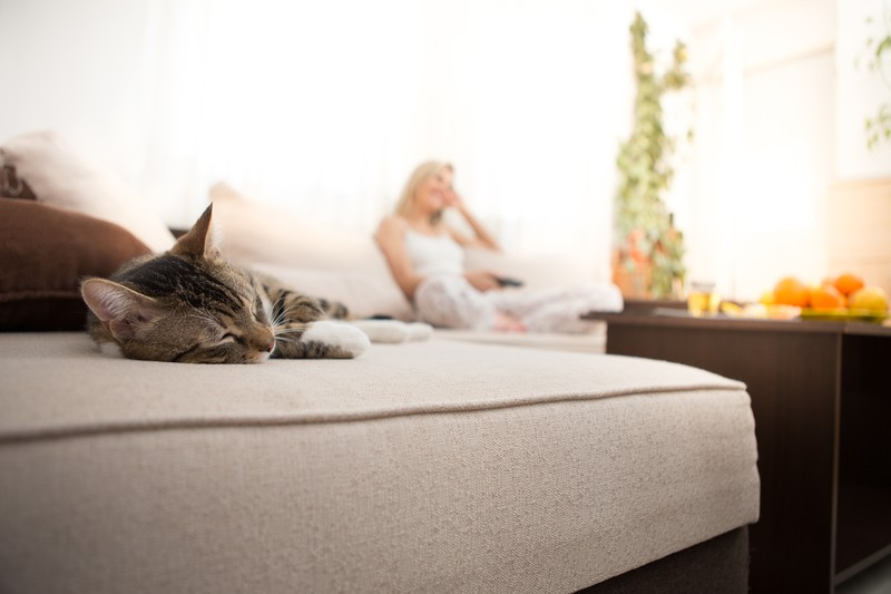 Katze schläft auf Sofa