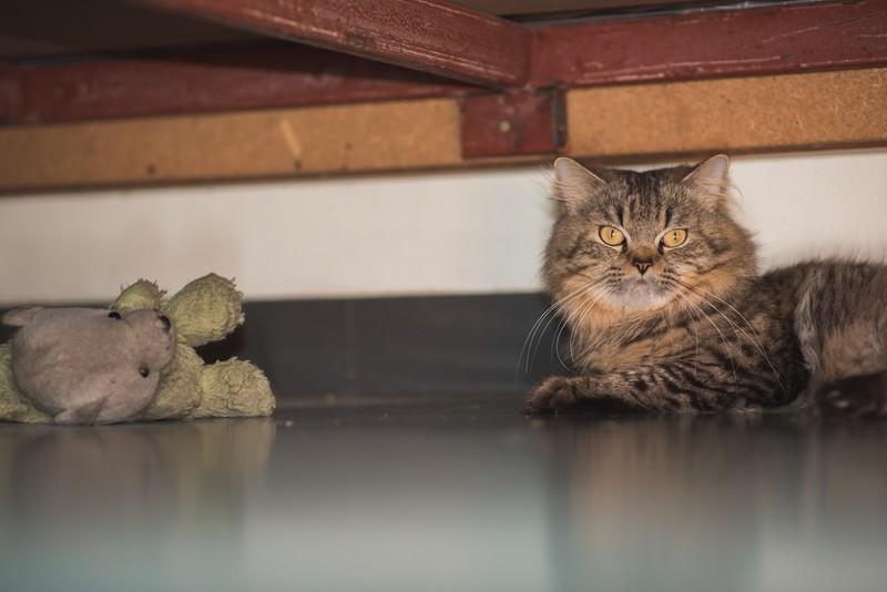 Katze versteckt sich an Jahreswechsel unter dem Bett
