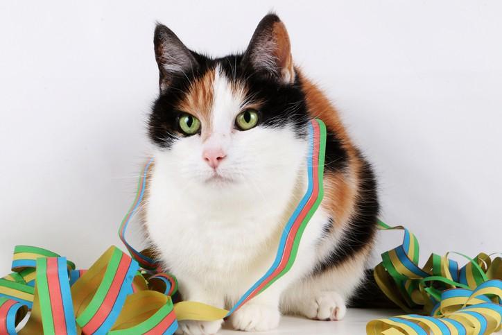 Katze zu Silvester