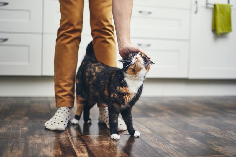 Ruhiger Jahreswechsel für deine Katze: 10 Tipps, wie die Katze es übersteht