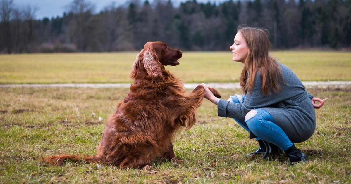 7 Fehler bei der Erziehung eines Hundes, die du vermeiden solltest