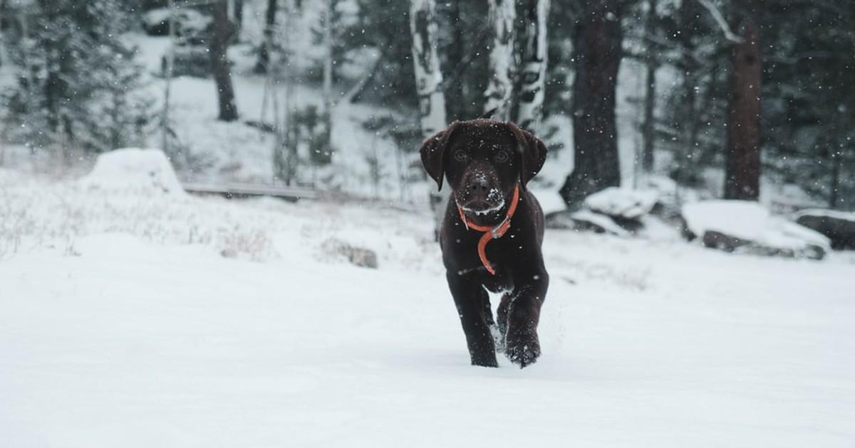 Wintersport mit Hund: 10 Dinge, die du beachten solltest