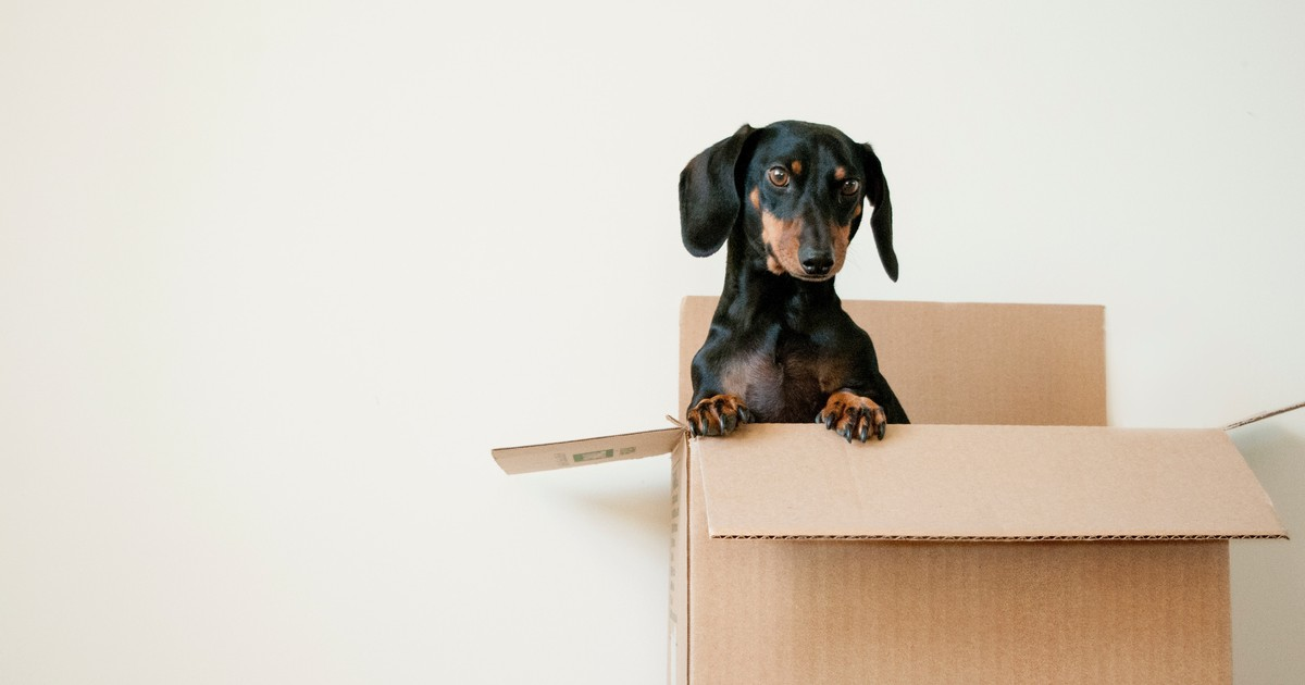 19 schöne Hundenamen, die Glück bedeuten