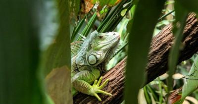 Reptilien richtig überwintern: 10 Dinge, die du beachten solltest