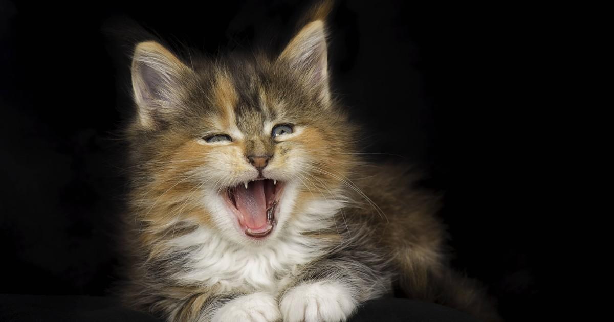 Gewusst? Deshalb haben Katzen eine raue Zunge