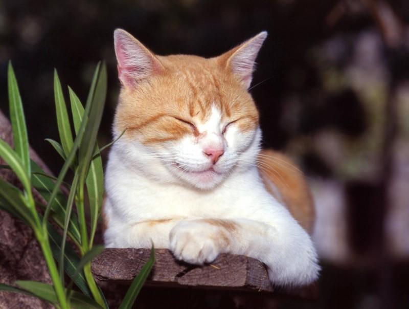 Eine Katze, die ihren Kopf aufrecht hält, während sie schläft, ist unentspannt.