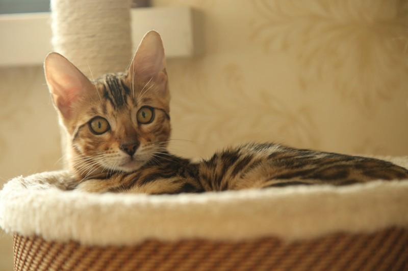 Katze im Kratzbaum mit Hängematte