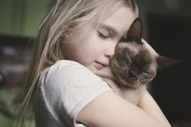 Bei einer Zuchtkatze sollte man darauf achten, dass der Züchter alles über die Bedürfnisse der Katze weiß.