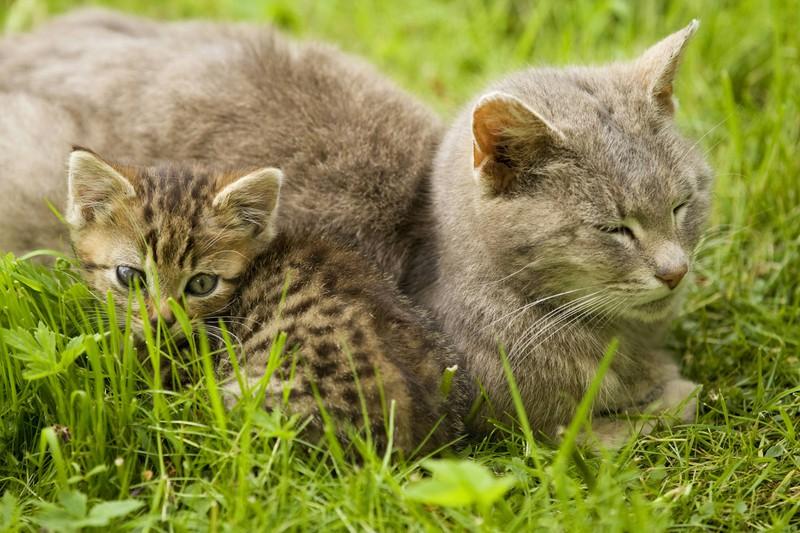 Katzenmutter und Katzenbaby kuscheln zusammen im Gras.