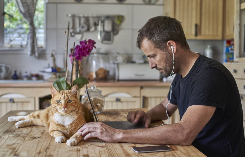 Mann sitzt an seinem Laptop, während er seine Katze streichelt.