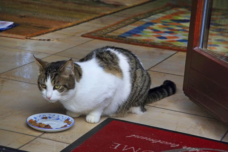Die Katze frisst ihr Futter vielleicht nicht, weil der Grund ist, dass das Futter nicht frisch ist
