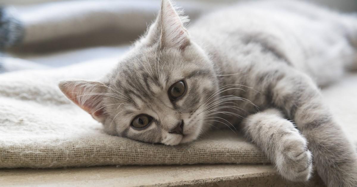 5 Anzeichen, dass deine Katze einsam ist