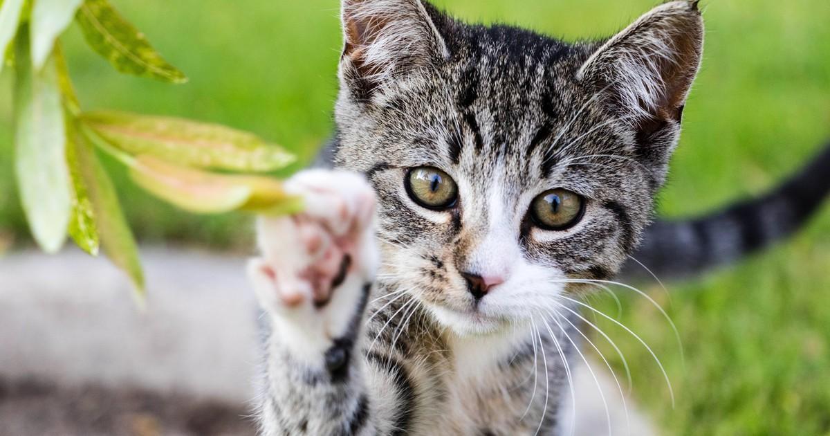 7 häufige Fehler: Machst du sie auch unbewusst bei deiner Katze?