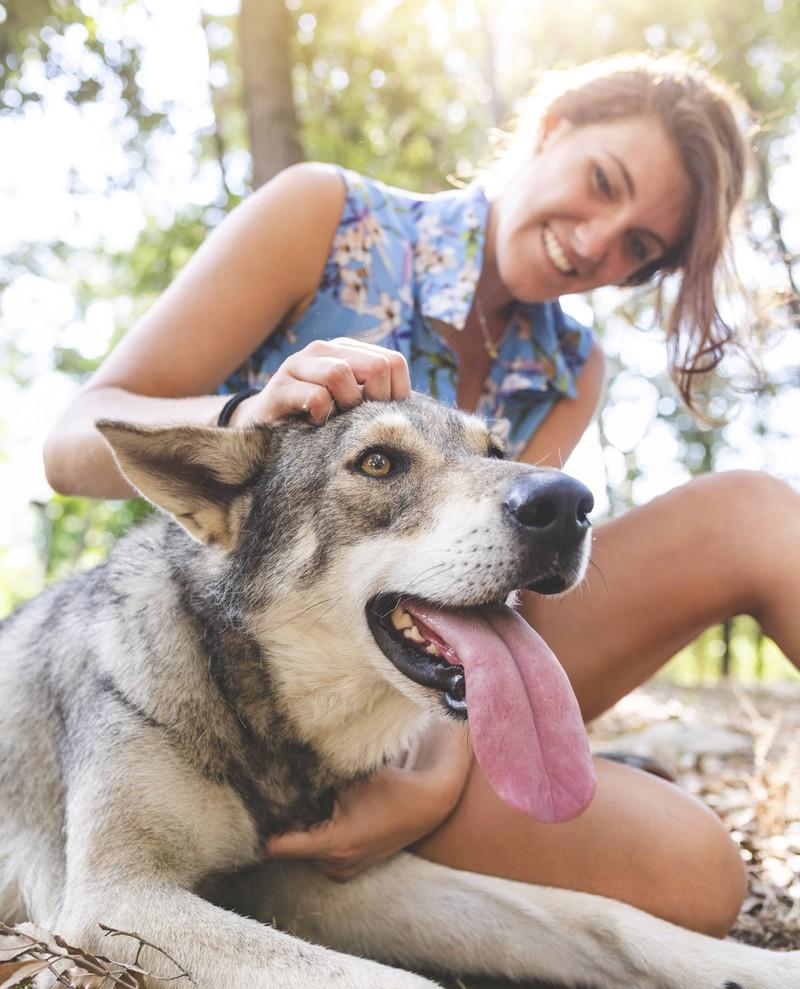 Ein weiteres No-Go für Hunde ist es, ihren Kopf ständig zu tätscheln
