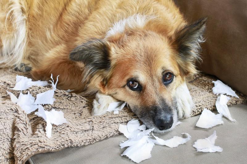 Es ist ein No-Go seinen Hund sehr lange allein zu lassen.