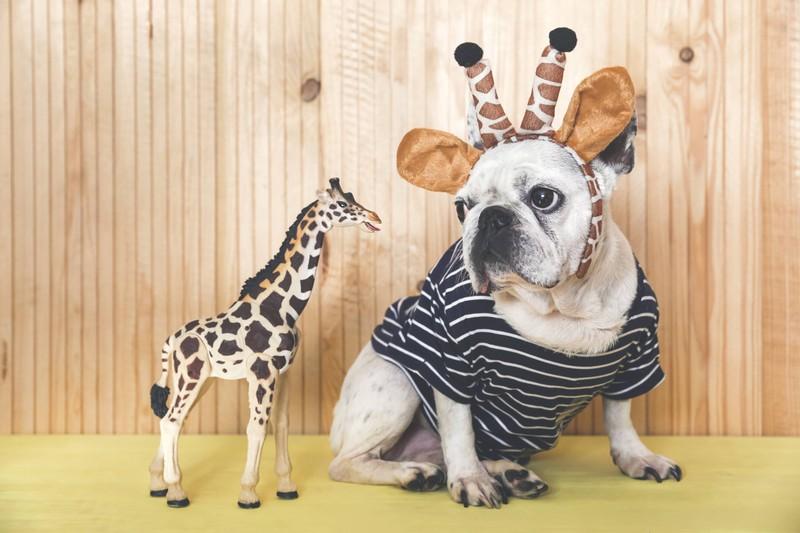 Hunde können es nicht ausstehen wenn man ihnen Kostüme anzieht