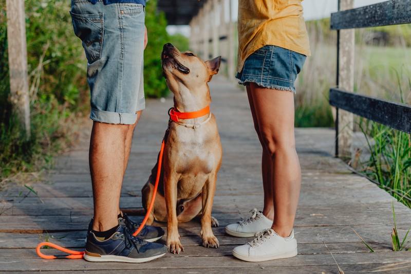 Hunde mögen es nicht, wenn die Besitzer über ihn reden und er nicht direkt dabei ist.